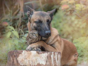 کتے اور الو کی بے مثال دوستی