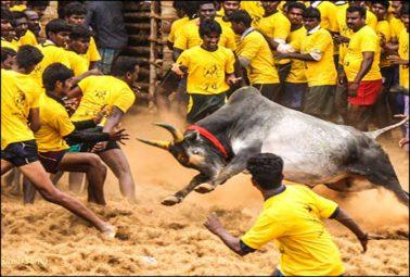 بپھرے بیل سے لڑنے کا مقابلہ،
