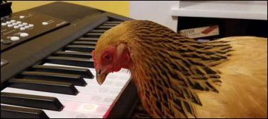 پیانو بجانے والا